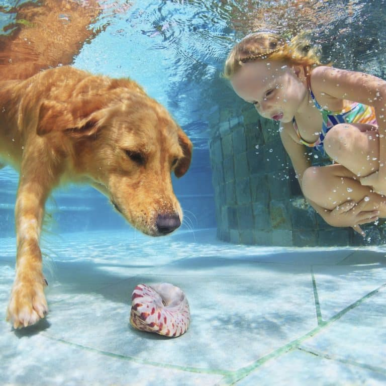 Dog and Young Girl enjoying in pool